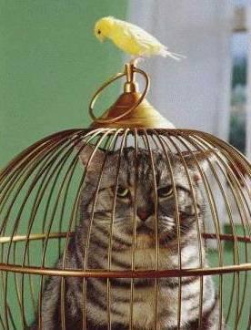Quips, Quotes & Fun Stuff Cat_in_cage