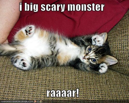 funny cute. Funny Cat Pics